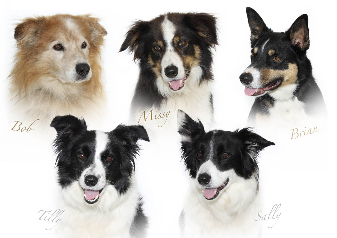 Pennys dogs